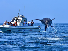Boat Charters in South Africa
