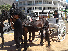 Mountain View Horse Trails - Carriage Drives