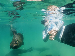 Pro Dive Plettenberg Bay - Swimming with Seals