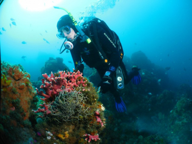 Pro Dive Scuba Diving Courses In Port Elizabeth Port