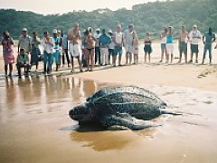 Thonga Beach Lodge - Turtle Tours