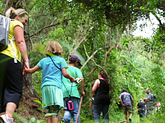 Ingwe Forest Adventures - Gifts of the Earth