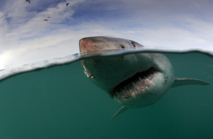 Shark Cage Diving - The Best Cape Town Adventures