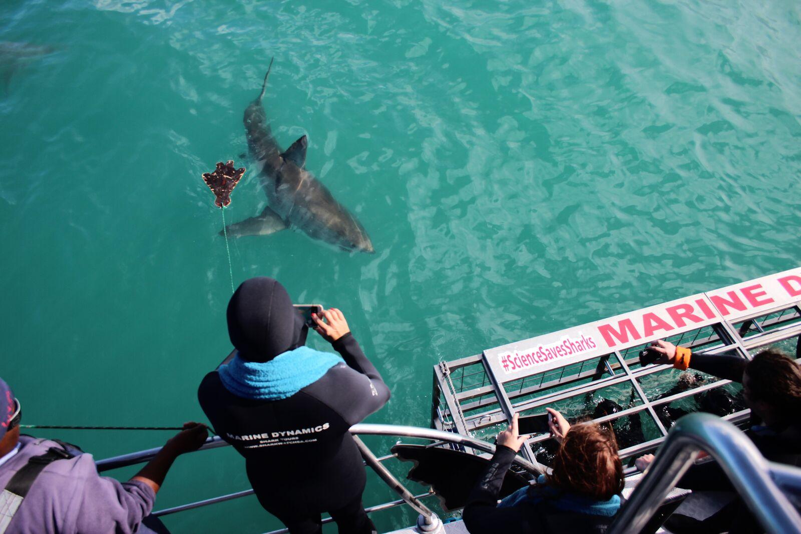 Marine Dynamics - Shark Tours