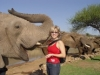 Pilanesberg Elephant-Back Safaris