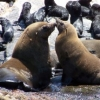 Seal Trips with Simon's Town Boast Trips