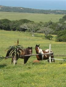 3 Sisters Horse Safaris