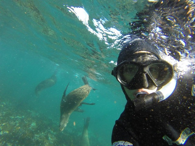 Cape Town Bucket List - Seal Snorkelling