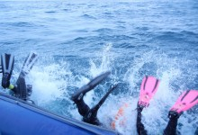 Knysna Dive Charters - Seablue Scuba Safaris