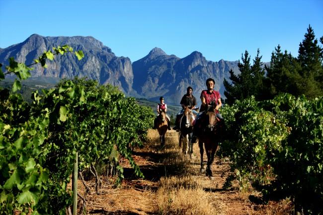 Fynbos Horse Trails