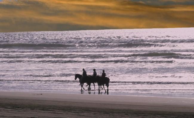 Horse Beach Rides - Horse Riding