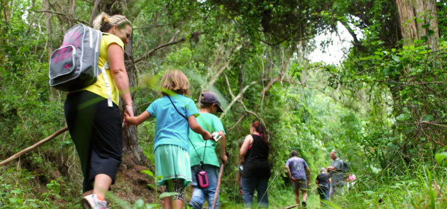 Ingwe Forest Adventures - Gifts of the Earth Walks