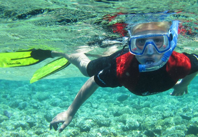 Pro Dive - Snorkeling