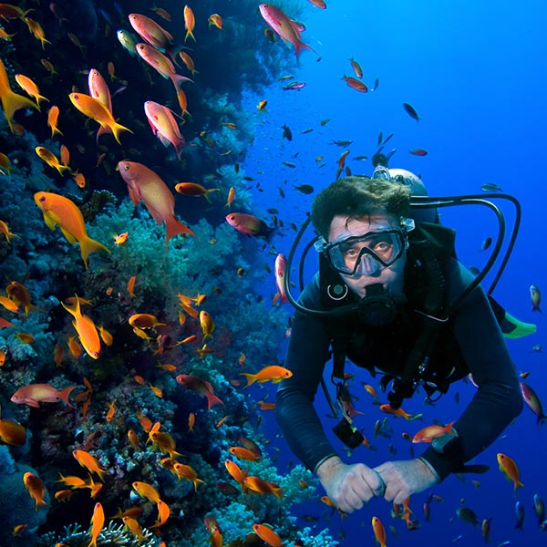 Pro Dive Plettenberg Bay - Scuba Diving