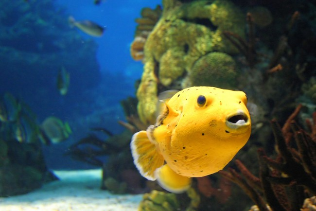 Calypso Dive & Adventure Centre