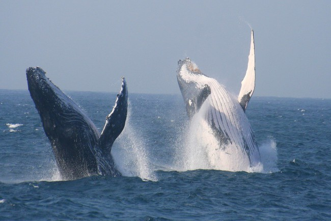 St Lucia Tours and Charters - Richards Bay