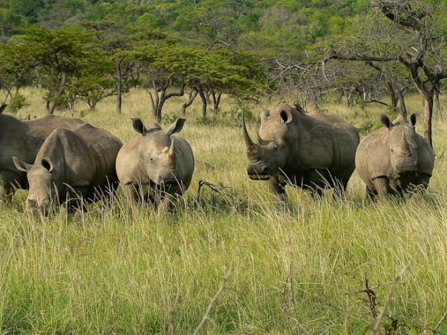 Sunway Safaris