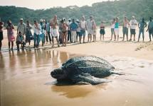 Thonga Beach Lodge - Turtle Tours