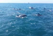 Umhlanga Ocean Charters - Boat Charters