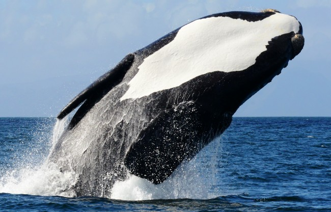 Waterfront Adventures - Whale Watching