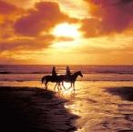 Beach Horse Riding6