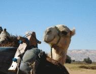 Camel Riding1