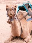 Camel Riding2