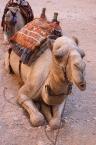 Camel Riding3