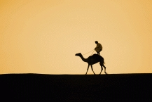 Camel Riding7