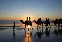 Camel Riding8