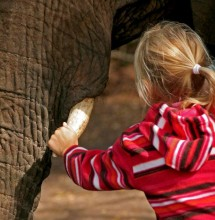 Elephant Sanctuary Plettenberg Bay
