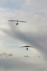 Hang Gliding3