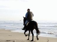 Horse Riding3