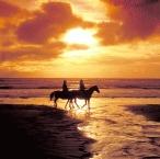 Horse Riding7