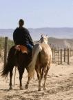 Horse Riding9