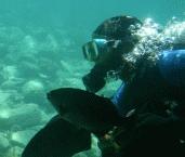 Scuba Diving3