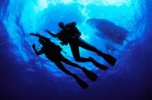 Scuba Diving4