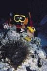 Scuba Diving7