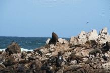 Seal Trips1