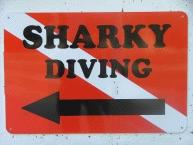 Shark Diving1