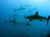 Shark Diving3