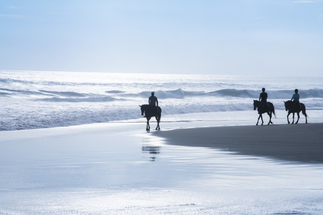 Ocean Trails Equestrian Centre Horse Riding Wild Coast