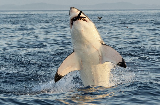 Apex Shark Expeditions - Cape Town
