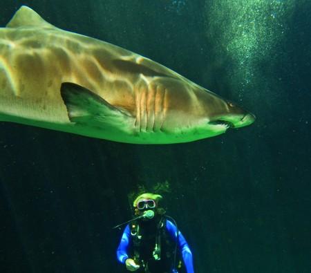 Aquarium Diving South Africa